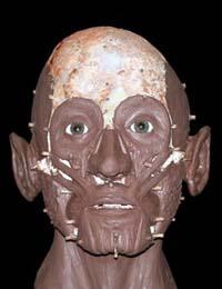 medieval facial reconstruction